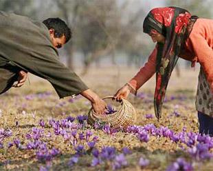 saffron-content-image1