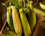 maize-thumb